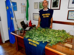 pesaro-forestale-cannabis