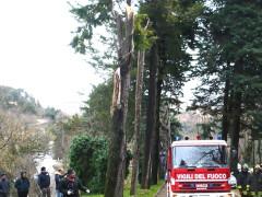 Maltempo ad Urbino: albero si spezza per il vento e uccide una persona