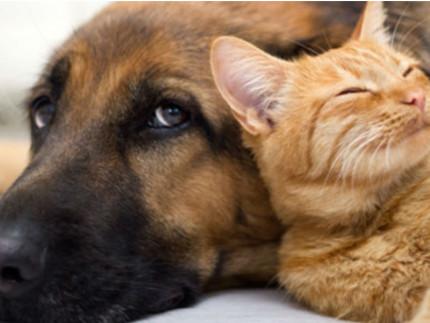 cani, gatti, animali domestici