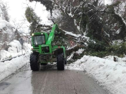 Maltempo, neve, alberi caduti