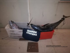 Tonni rossi sequestrati a Pesaro