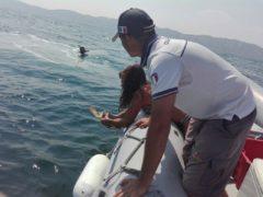 Rilascio in mare della tartaruga Sofy