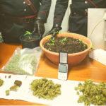 Marijuana sequestrata a San Lorenzo in Campo