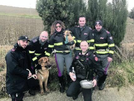 I cani recuperati delle autorità nei pressi dell'autostrada