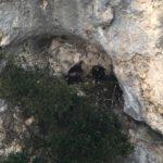 Aquile reali sul Monte Paganuccio