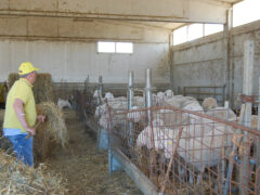 Censimento generale dell'agricoltura