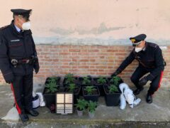 Coltivazione di marijuana scoperta a Colli al Metauro