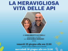 """""""La meravigliosa vita delle api"""" a Urbino"""
